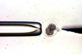 Splitting an Embryo